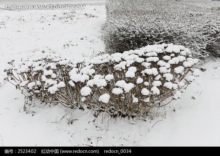 雪中植物图片