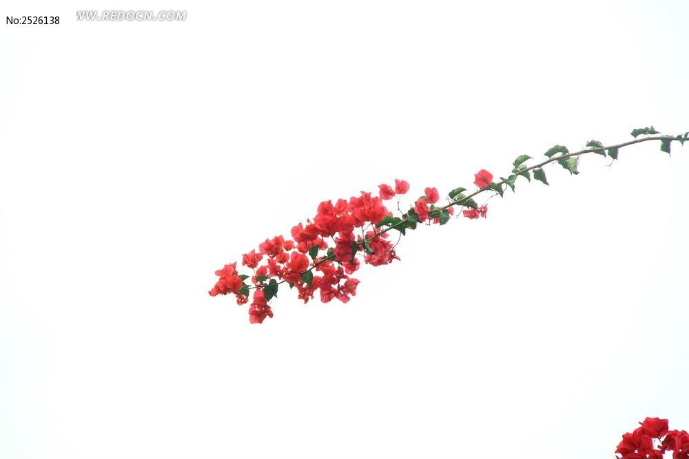原创摄影图 动物植物 花卉花草 一枝红花
