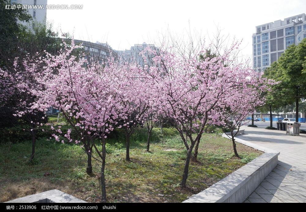 桃花树图片,高清大图_花卉花草素材