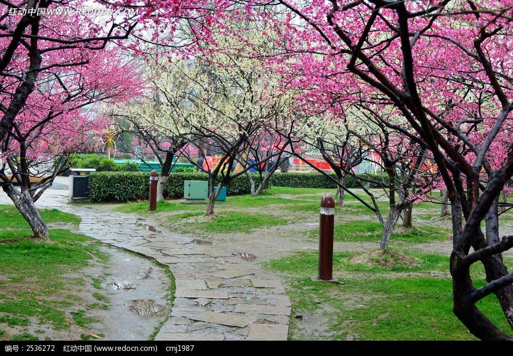 梅花树间的道路图片_动物植物图片