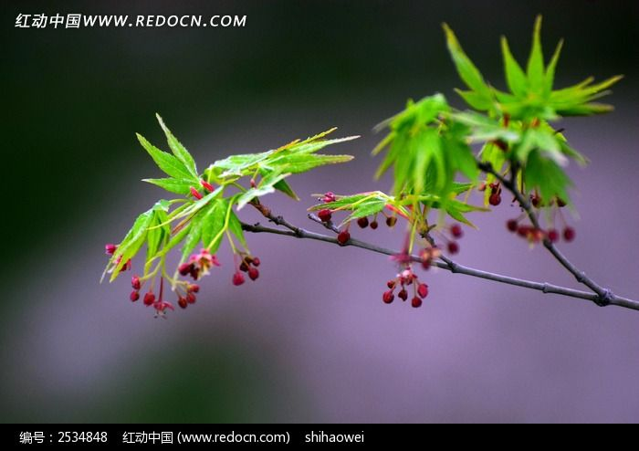 花卉植株图片