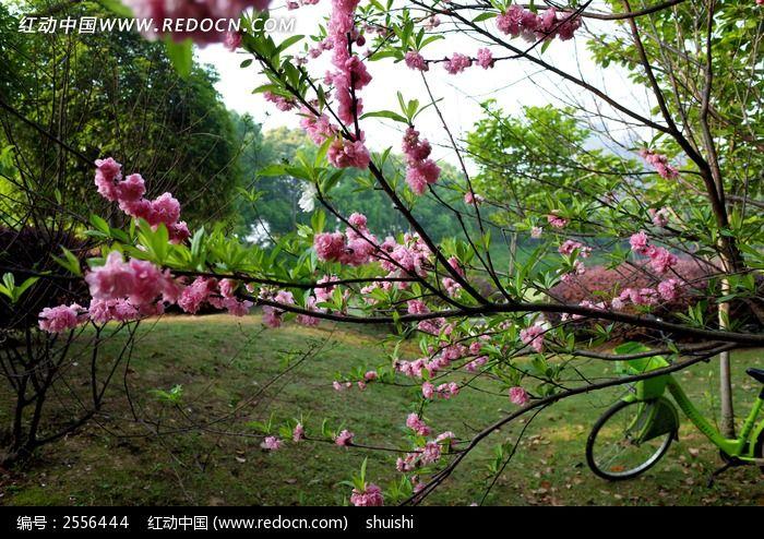 桃花树下图片_动物植物图片