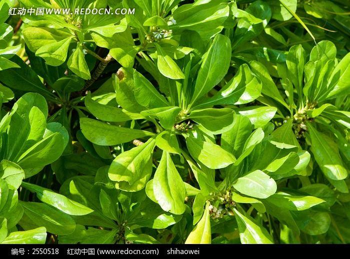 绿色叶子图片_动物植物图片