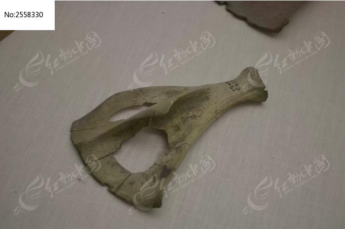 古生物骨骼&nbsp