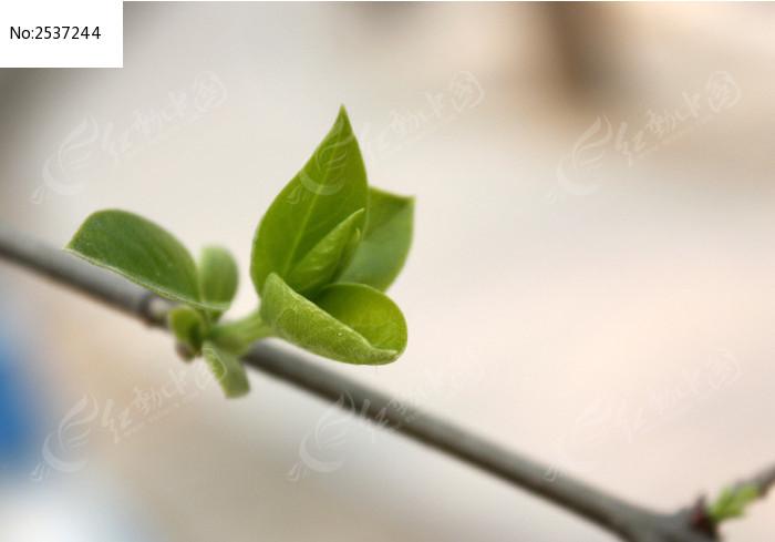 树枝上的绿叶子