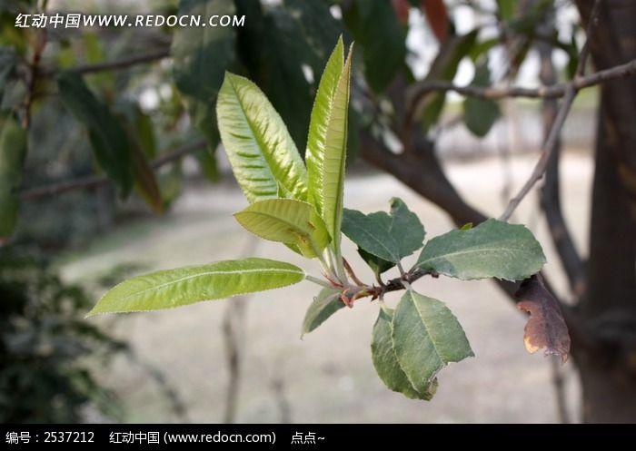 原创摄影图 动物植物 树木枝叶 叶子