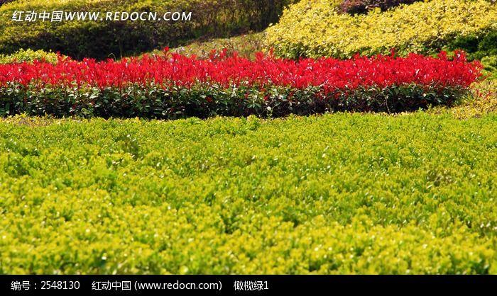 灌木丛图片_动物植物图片