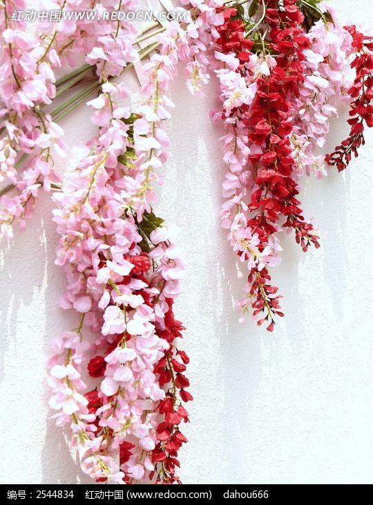 墙上的鲜花图片_动物植物图片