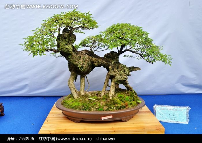 盆栽植物特写图片_动物植物图片