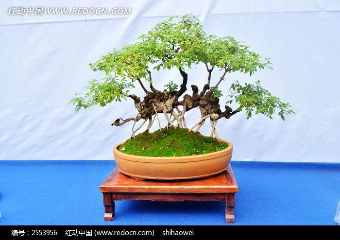 盆栽植物景观图片_动物植物图片