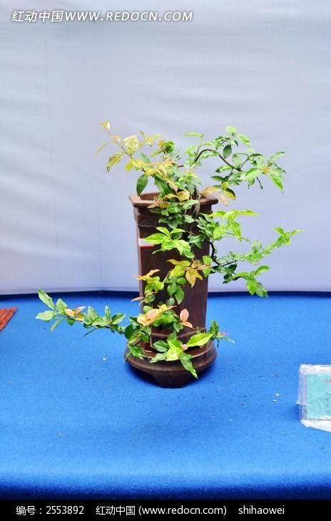 原创摄影图 动物植物 树木枝叶 植物盆景