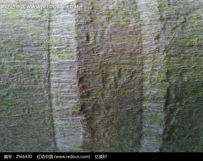 树皮纹路图片,高清大图