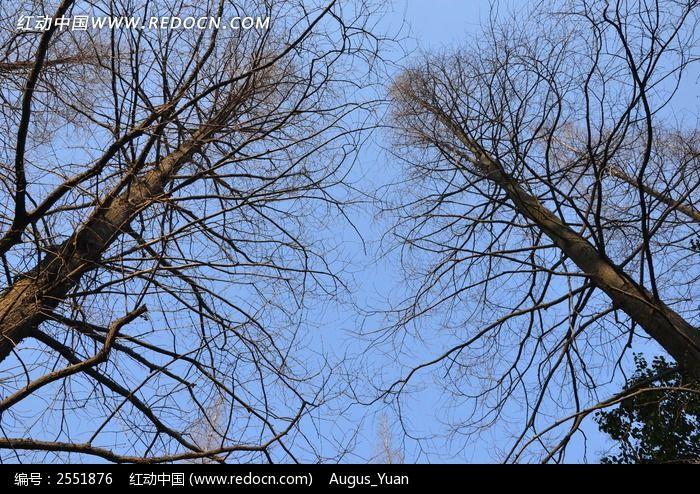 原创摄影图 自然风景 森林树林 蓝天下的枯树  请您分享: 红动网提供