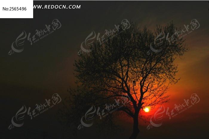 树木剪影图片,高清大图_树木枝叶素材