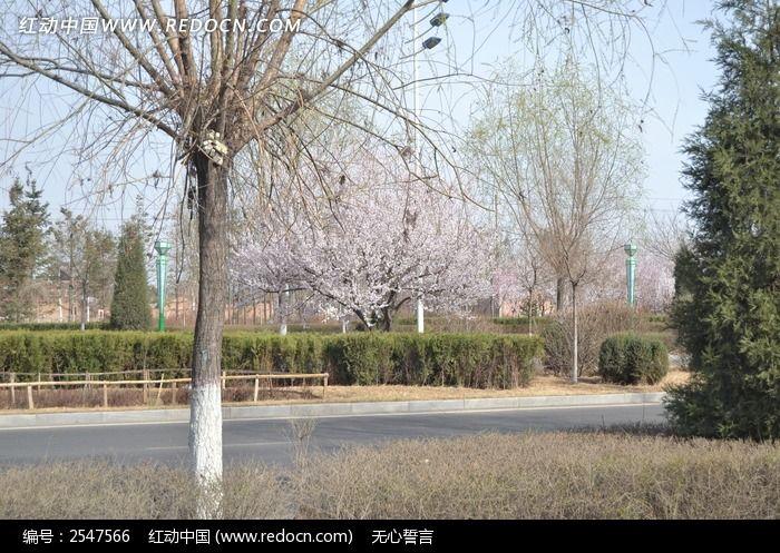 马路旁的树木图片_建筑摄影图片