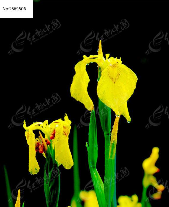 原创摄影图 动物植物 花卉花草 花色鲜花盛开