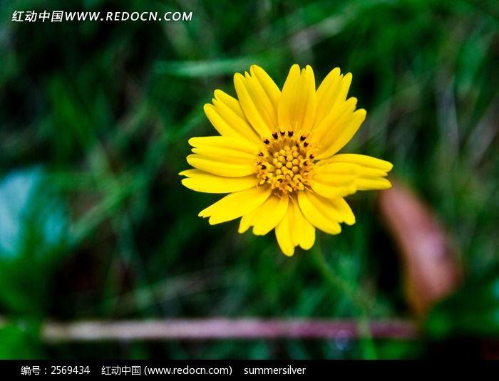 一朵黄色小花图片