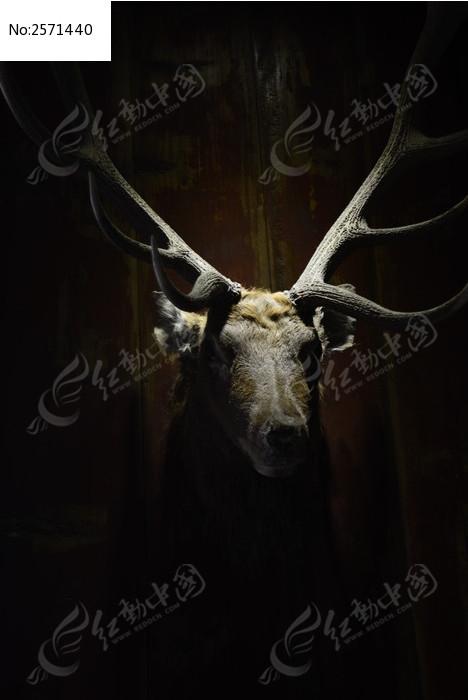 手机壁纸鹿头手绘