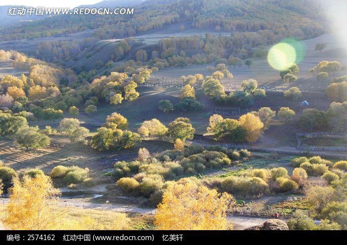 山坡上的树木图片素材下载(编号:2574162)