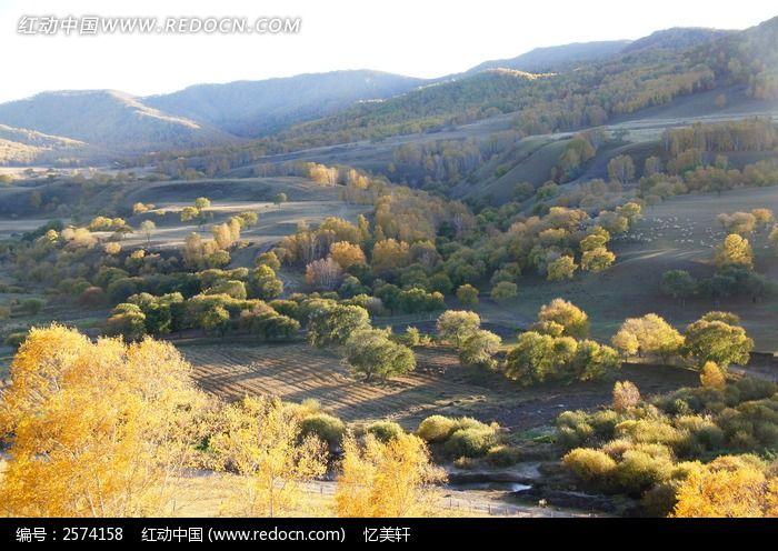 山坡上的灌木丛图片,高清大图_森林树林素材
