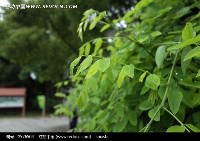 嫩叶图片,高清大图_树木枝叶素材