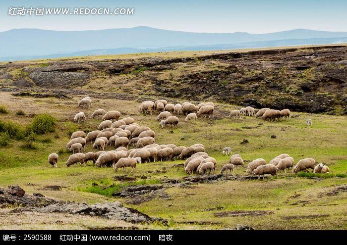 山坡上的羊群图片, 高清 大图