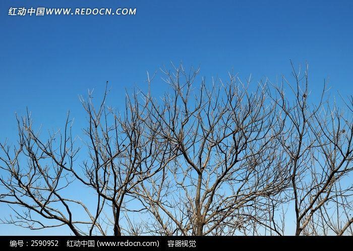 枯树树冠图片,高清大图_森林树林素材