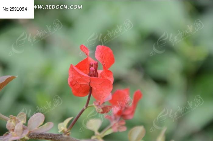 原创摄影图 动物植物 花卉花草 红花和绿叶  请您分享: 素材描述:红动