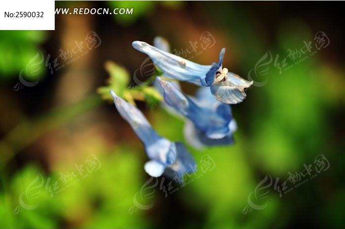 春天初绽的铃兰图片_动物植物图片