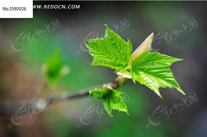 原创摄影图 动物植物 花卉花草 春天发芽绿叶