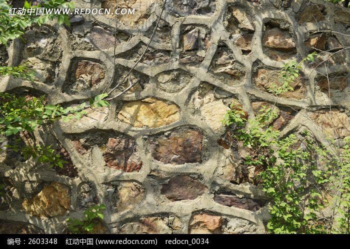 石头地下的动物