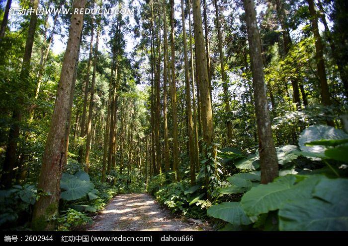 森林小道图片_动物植物图片