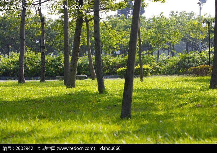 公园里的绿茵草地_自然风景图片