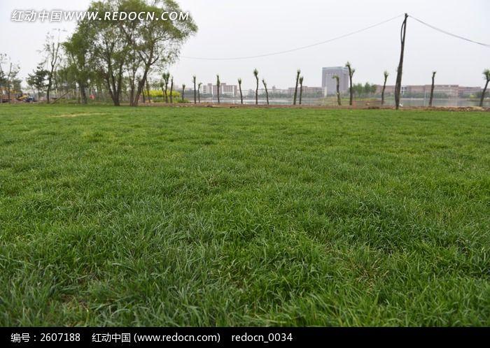 原创摄影图 动物植物 花卉花草 一片绿草地