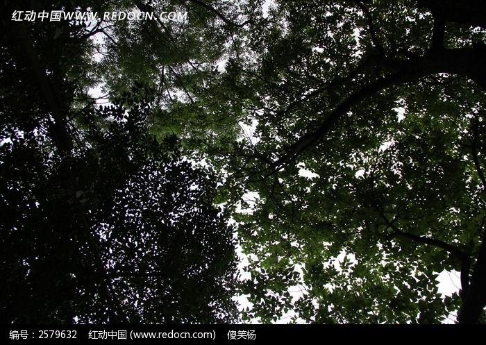 茂密阴暗的树木图片,高清大图_森林树林素材