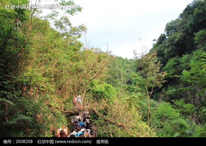 大山深处茂密的树木图片,高清大图_森林树林素材