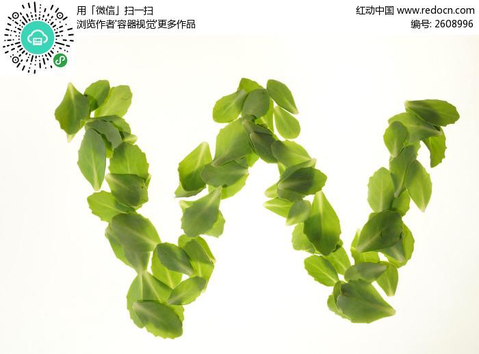 叶子的结构图解