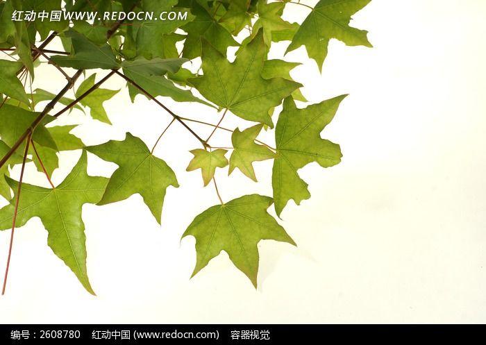 树叶纹理拍摄图片,高清大图_树木枝叶素材