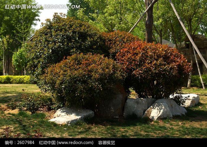 园林绿化植物图片