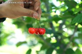 手拿一串鲜红的大樱桃