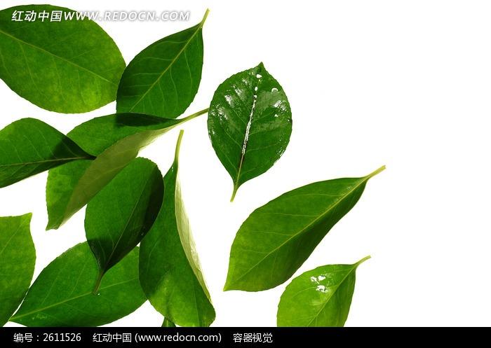 绿色树叶高清晰拍摄图片,高清大图_树木枝叶素材