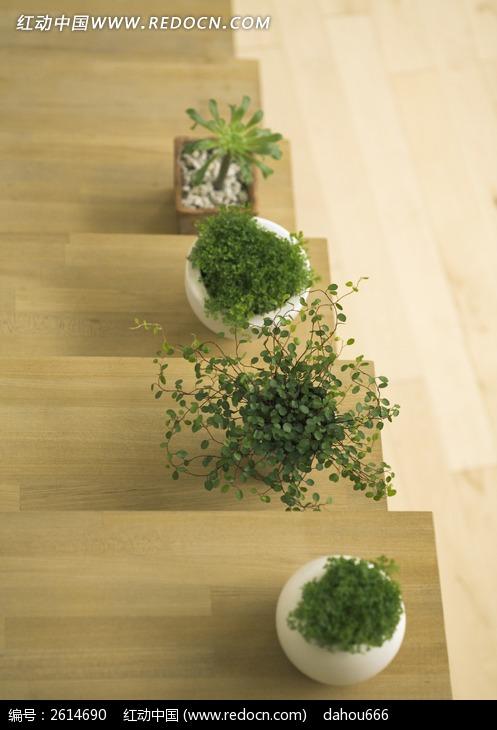 室内木梯上的盆栽植物图片_动物植物图片