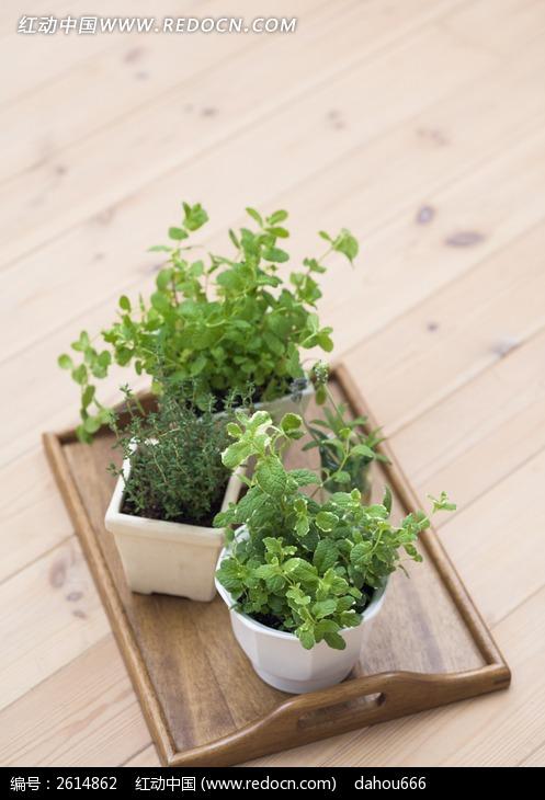 室内盆栽绿色植物图片