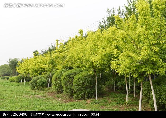 原创摄影图 动物植物 树木枝叶 景观树木摄影