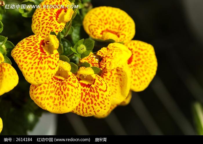 稀有植物花卉图片,高清大图