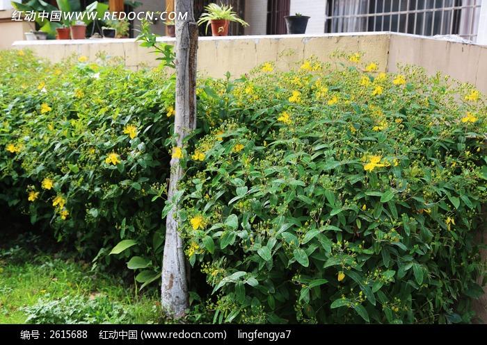 黄花绿叶图片_动物植物图片