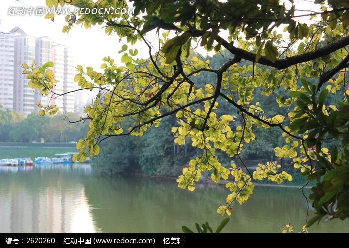 湖边树木剪影图片,高清大图_江河湖泊素材