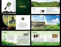 绿茶宣传册设计