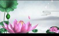 中国风水墨荷花花瓣高清视频背景素材
