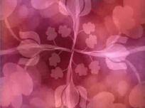 鲜花背景花纹视频素材